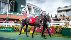 Unusually coloured Madison To Monroe makes a splash at £300,000   Bloodstock News   Racing Post