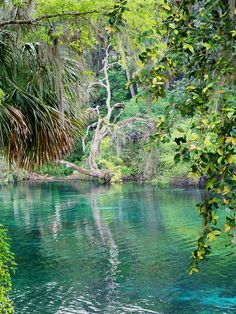 ✮ Rainbow Springs, Dunnellon, Florida   @Geraldine Barnets , this is the springs we want to camp at. I hope you will come!