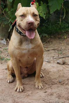 Buboo Petesscool (My Dog)