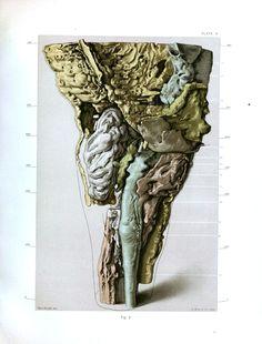 anatomy human body illustrations print vintage antique - Buscar con Google