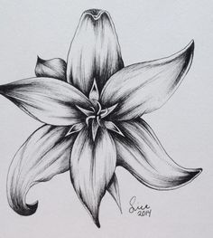Learning to Draw? You're Gonna Need a Pencil - Drawing On Demand Pencil Drawings Of Flowers, Flower Art Drawing, Flower Sketches, Dark Art Drawings, Floral Drawing, Pencil Art Drawings, Art Drawings Sketches, Cool Drawings, Painting & Drawing
