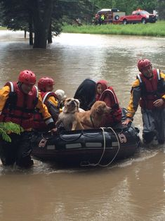 Dogs being rescued from a flooded kennel in Ohio