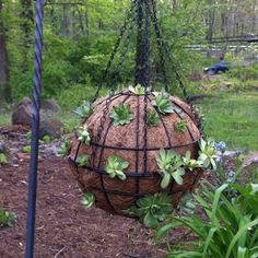 A hanging ball of succulents.this would be beautiful once the succulents take over! Garden Types, Love Garden, Garden Pool, Garden Beds, Garden Art, Container Flowers, Container Plants, Outdoor Planters, Outdoor Gardens