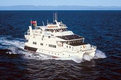 Why You Should Do a Great Barrier Reef Liveaboard Experience