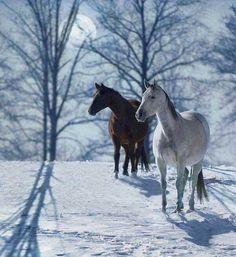 die 222 besten bilder von pferde im schnee pferde im. Black Bedroom Furniture Sets. Home Design Ideas