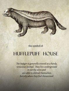 hufflepuff pride.