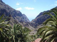 Tenerife-Masca kloof. Loop vanuit het dorpje Masca door de betoverende kloof, neem het wiebelbootje naar Los Gigantes en ga op walvis- en dolfijnexcursie!