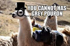 Well, we've certainly heard tales of hoarding llamas, but we've never actually seen one until now! #greypoupon