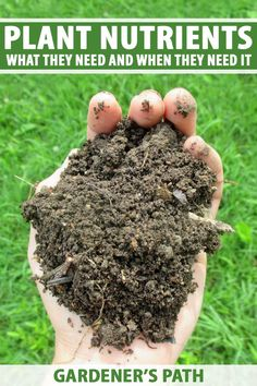 Like humans, plants need a wide range of nutrients that they can gain from a variety of sources. Nutrients are critical to the appearance, growth, and pest and disease resistance of your plants. Learn how to diagnose deficiencies, feed your plants, and restore balance now on Gardener's Path. #fertilizer #gardenerspath Growing Vegetables, Growing Plants, Gardening For Beginners, Gardening Tips, Leafy Plants, Flowering Plants, Vegetable Garden Tips, Plant Guide, Soil Improvement