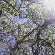 Love me a good tree#tree#nature#flowers#bloom