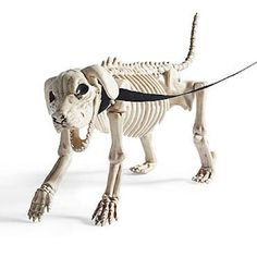skeleton dog leash halloween prop bones pet walking dead zombie graveyard puppy