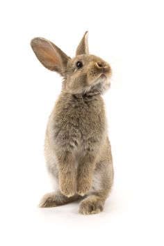 Bunnies & Baby Chicks As Pets or Photos This Easter? Why You Should Think Again