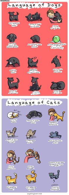 languages_of_dogs_and_cats.jpg