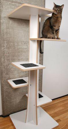"Square Cat Habitat 60"" Baobab Cat Tree | AllModern"