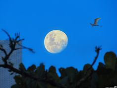 Moon - Santos/SP - Brazil