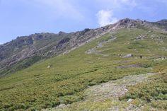 Present Tree in 宮古の森のある川井地区には、北上山地の最高峰・早池峰山(はやちねさん)を中心とした「早池峰国定公園」があります。