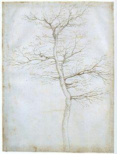 Fra Bartolommeo della Porta, A Tree in Winter, after 1504