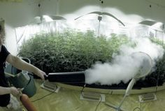 Creating CO2 For Your Indoor Grow Room