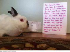This is a bun bun's work of art! #bunny #bunnies #rabbit #rabbits #pet #pets #cuteanimals #cuteanimal