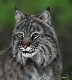 Award-winning Canadian artist Marilyn Barkhouse specializes in photo-realistic paintings of charming cats, dogs and wildlife. The artist's work is now available for licensing by Porterfield's Fine Art Licensing. Big Cats Art, Cat Art, Creation Photo, Prince, Realistic Paintings, Animation, Animal Totems, Canadian Artists, Tole Painting