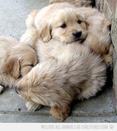 Sleeping cuteness