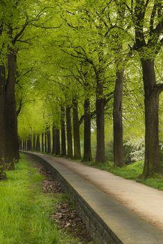 "mistymorningme: ""Green tunnel by creyesk """