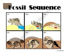 Image result for how fossils are formed step by step