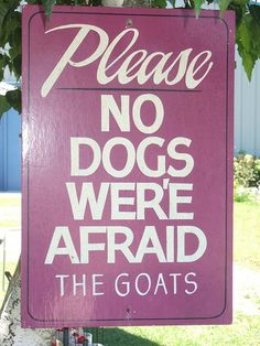 funny funny pictures funny photos hilarious funny signs fail 19 Ways Spelling Mistakes Make Ordinary Signs Hilarious Funny Grammar Mistakes, Grammar Memes, Bad Grammar, Grammar And Punctuation, Spelling And Grammar, English Grammar, English Spelling, Teaching Grammar, English Class