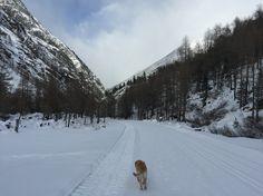 Winterspaziergang Zermeiggern