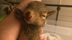 Stop Baptist Church's Mass Killing of Squirrels