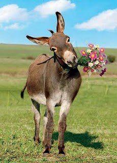 Donkey W/Flowers Belated Birthday Card - Greeting Card by Avanti Press