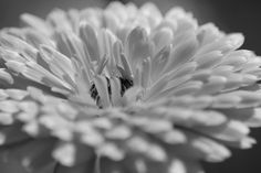 flower in bw by Klaus Vartzbed on 500px