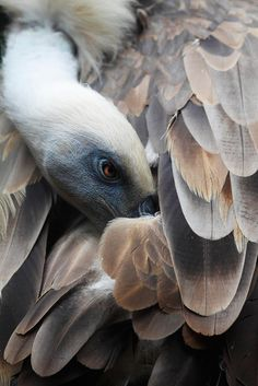 Griffon Vulture Photo and caption by Andres Lopez http://photography.nationalgeographic.com/contest-2015/gallery/week-1-all/7