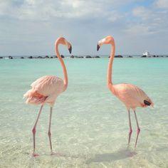 .perfect (flamingo) pair