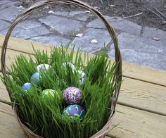 Grow some natural grass for an Easter basket!