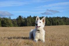 shepherd in the nature