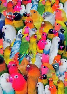 ~Bird Paradise~