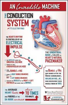 Conductive system- nremt paramedic