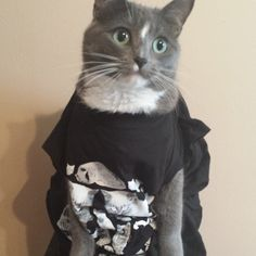 Maybe the first time we've seen our shirt on a cat!