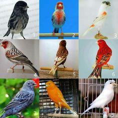 Love Birds, Beautiful Birds, Zebra Finch, Canary Birds, Cat Quotes, Pigeon, Bird Feathers, Pet Birds, Animals And Pets