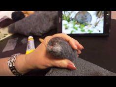 Мастер класс. Валяние из шерсти  рыжего Котенка - брошки(Подробное видео) - YouTube