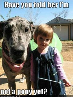 Funny Great Dane Dog Memes of All Time Funny Dog Captions, Funny Dog Memes, Funny Pictures With Captions, Funny Cats And Dogs, Funny Animal Pictures, Dog Pictures, Funny Animals, Cute Animals, Dog Humor