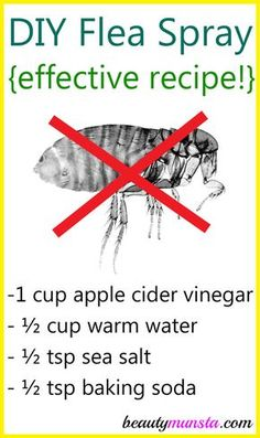 Make this homemade flea spray with vinegar and baking soda to kill fleas on your pets and in the house! Dog Flea Remedies, Home Remedies For Fleas, Flea Remedy For Dogs, Natural Remedies For Fleas, Herbal Remedies, Health Remedies, Hair Remedies, Natural Cures, Homemade Flea Spray