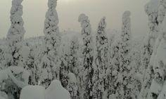 Lumiset puut ja usvaiset huiput