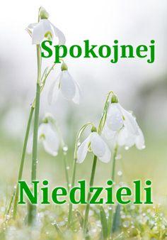 Good Morning, Herbs, Sunday, Buen Dia, Bonjour, Herb, Good Morning Wishes, Medicinal Plants