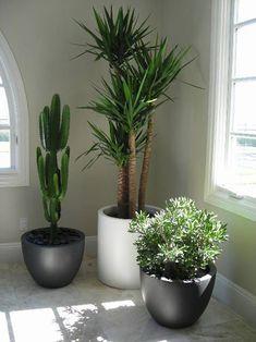 Diy Garden, Indoor Planters, Office Plants, Interior Plants, Indoor Gardening Diy, Big Plants, Plant Design, Diy Planters Indoor, Indoor Plants