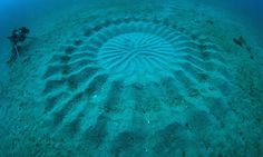 Mysterious Underwater Circles Found near Japan - cameras revealed that the culprit was a few-inch long puff fish, creating the sand sculptures by swimming tirelessly and using its single fin.