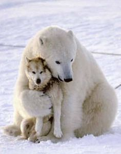 polar bear loves his dog friend