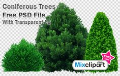 Coniferous Trees - Free PSD File With Transparent bg