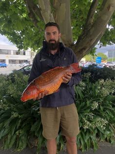 The HBRC is pleased that a new environmental DNA technology has helped confirm a suspected presence of the invasive koi carp in a farm pond in Hawke's Bay. A tip off from a farm manager, followed by a eDNA sample has resulted in a process to remove two fish that had been in the pond for some time. Freshwater ecologist Daniel Fake says koi carp have wreaked havoc in the Waikato, Auckland and Northland where they have proliferated, and the council doesn't want that to happen in Hawke's Bay. Dna Technology, Farm Pond, Two Fish, Koi Carp, Healthy Environment, Freshwater Fish, Auckland, Climate Change, Fresh Water